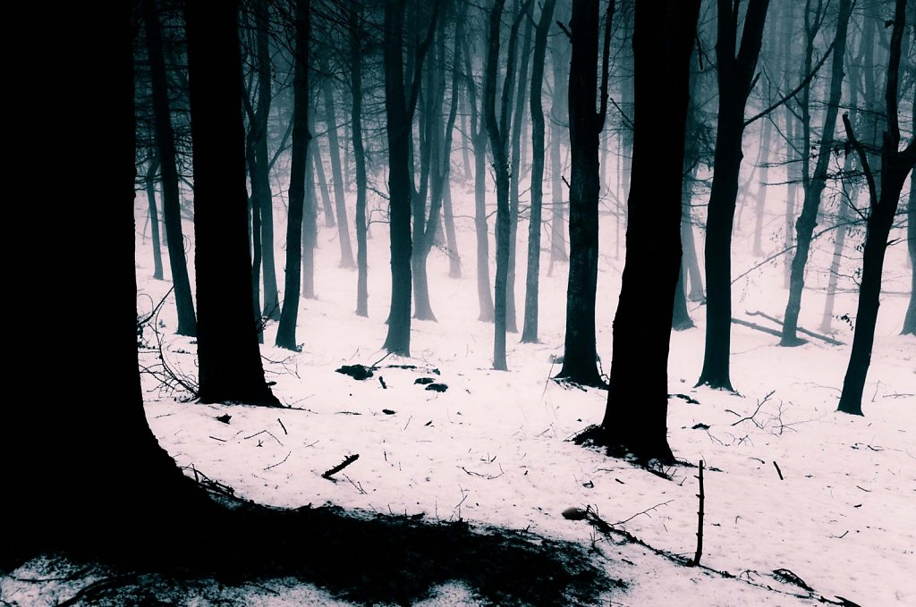 """""""Vanishing Woods"""""""