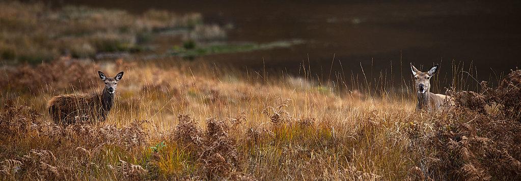 Red Deer Panorama
