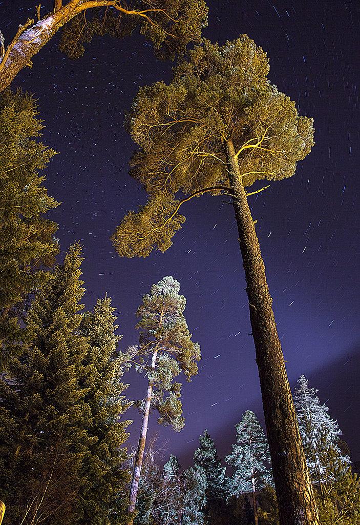 Pinewood glow