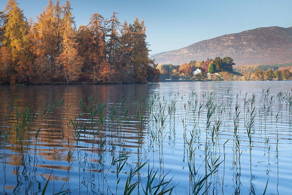 Autumn ripples